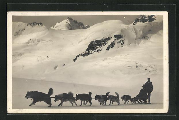 AK Jungfraujoch, Polarhunde auf dem Aletschgletscher 0