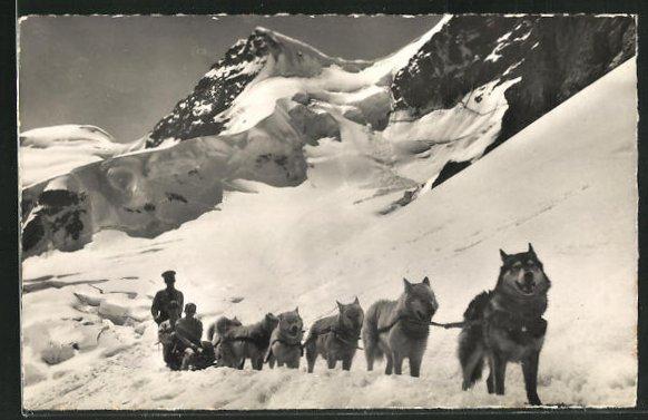 AK Polarhunde auf dem Jungfraujoch 0