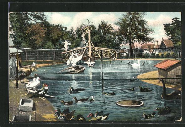 AK Halle a. S., Zoologischer Garten mit Enten, Gänsen, Pelikanen und Schwänen 0