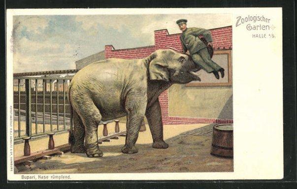 Lithographie Halle a. S., Bupari, Nasi rümpfend, Elefant nimmt Pfleger auf den Rüssel 0