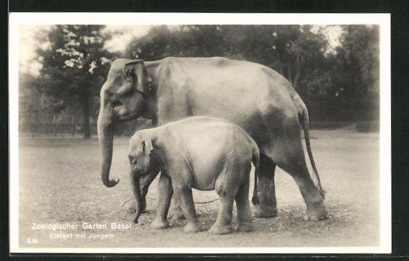 AK Basel, Elefant mit Jungem im Zoo 0