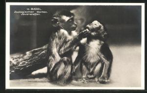 AK Basel, Javaneraffen im Zoologischen Garten