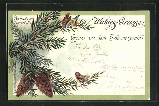 Duft-AK Waldes-Grüsse aus dem Schwarzwald, Tannenzweig mit Zapfen 0