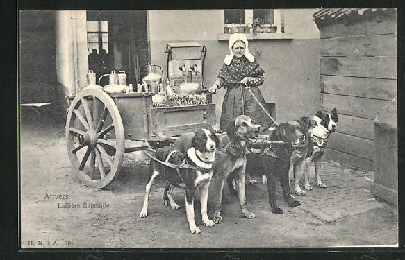 AK Anvers, Laitiere flamande, Milchkarren als Hundegespann 0