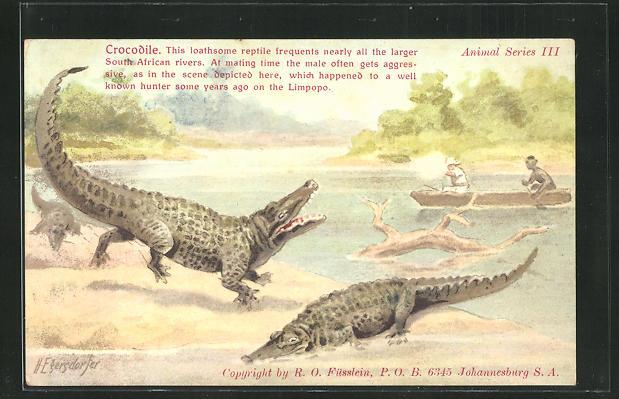 AK Männer schiessen vom Boot aus auf Krokodile am Ufer 0