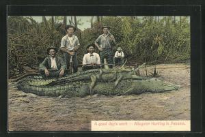 AK Panama, Allegator Hunting, Jäger mit erlegten Krokodilen am Ufer