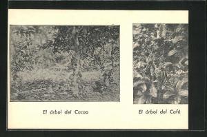 AK El arbol de Cacao, El arbol del Cafe, Kakao- und Kaffeebaum