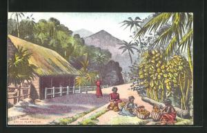 AK Scene in a Cocoa Plantation, Arbeiter bei der Kakaoernte