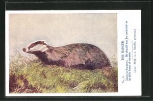 AK The Badger, Lives in burrows, He should not be molested as he kills hosts of vermin, Ideal Milk is a Nestle product