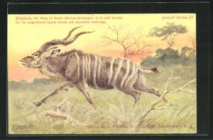 AK South Africa, Koodoo, Kudu läuft über die Wiese