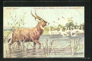 AK Waterbok and Flamingos, Wasserbock und Flamingos im Schilf