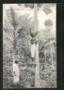 AK Ceylon, Tapping rubber trees, Forstarbeiter klopfen Gummibäume