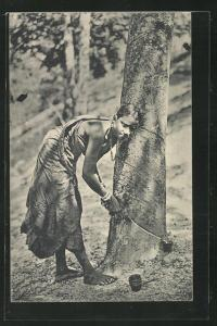 AK Ceylon, Tapping Rubber, Gummizapfen