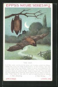AK Epps`s Nature Series No 5, The Bat, Fledermaus schlafend und fliegend