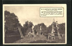 AK W. P. Hartley`s Aintree Works, Orangen-Reklame