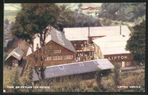 AK View on Ceylon Tea Estate, LiptonTee-Fabrik