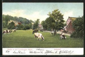 AK Bendestorf, Partie in der Lüneburger Heide
