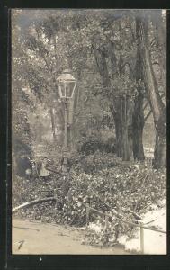 AK Zürich, Unwetter im Mai 1908, Umgestürzte Bäume durch Schneefall