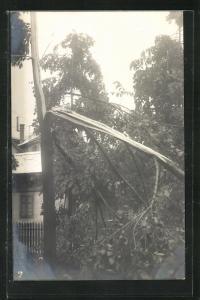 AK Zürich, Unwetter im Mai 1908, Zerstörte Bäume durch Schneefall
