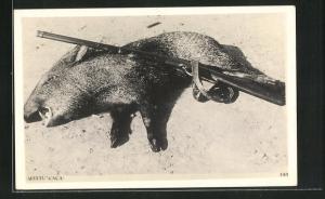 AK Erlegtes Schwein und Jagdgewehr