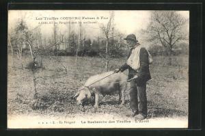AK Schwein bei der Trüffelsuche, La Recherche des Truffes, L`Arret