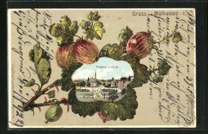 Passepartout-Lithographie Mühlhausen, Ansicht vom Eingang der Stadt, Stachelbeeren am Blatt
