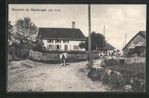 AK Mauborget, Ortspartie mit Kühen