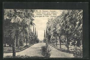 AK Soukhoum, Allee principale du Villa Synope