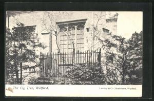 AK Watford, The Fig Tree, Blick auf Fenster