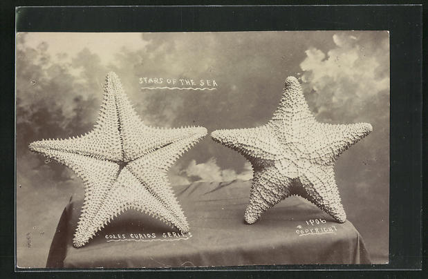 AK Stars of the Sea, Seesterne 0