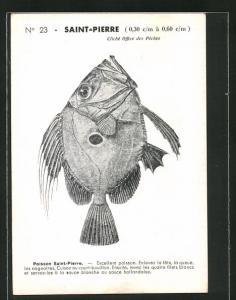 AK Paris, Comité National de Propagande pour la Consommation du Poisson, Poisson Saint-Pierre, Petersfisch