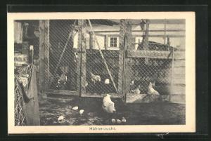 AK Sprottau, Kriegsgefangene, Hühnerzucht, Allied POW Camp