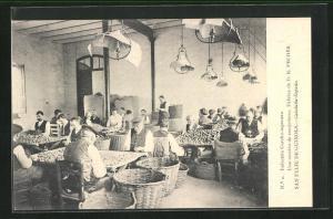 AK San Feliu de Guixols, Industria Corcho-taponera, Arbeiter bei der Korken-Herstellung, Weinanbau