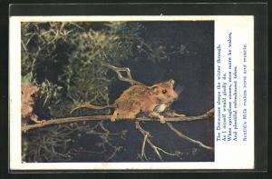 AK Teh Dormouse sleeps the winter through..., Maus auf einem Zweig, Nestle`s Milk makes bone and muscle