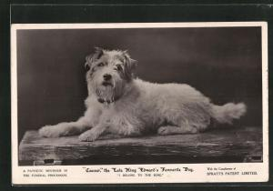 AK Caesar, The Late King Edward of England`s Fabourite Dog, Terrier des Königs