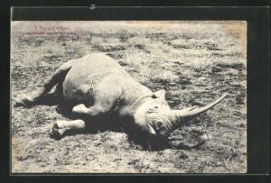 AK British East Africa, A Record Rhino, Erlegtes Nashorn