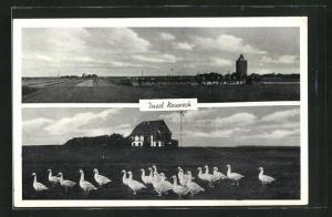 AK Hamburg-Insel Neuwerk, Totalansicht, Gänse