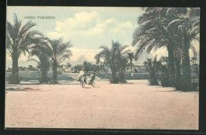 AK Cairo, Pyramids, Esel