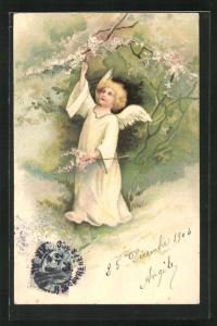 AK Engel pflückt blühende Zweige vom Baum