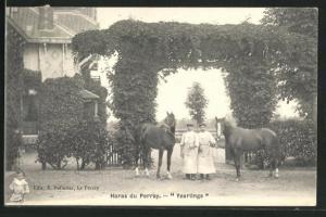 AK Haras du Perray, Yearlings, Pferde