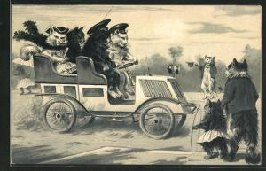 Lithographie Katzen in Automobil