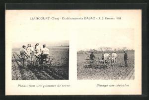 AK Liancourt, Etablissements Bajac, Plantation des Pommes de terre, Binage des cereales