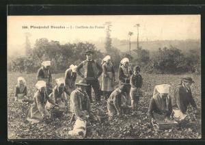 AK Plougastel-Daoulas, Bauern sammeln Erdbeeren vom Feld, Obst