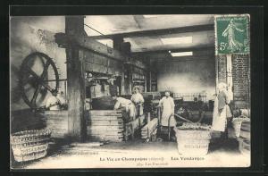 AK Champagne, Les Vendages, Les Pressoirs, Weinverarbeitung