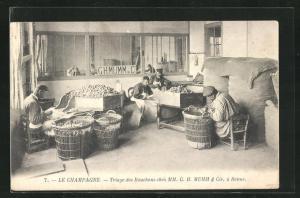 AK Reims, Triage des Bouchons chez Mumm & Cie., Weinverarbeitung