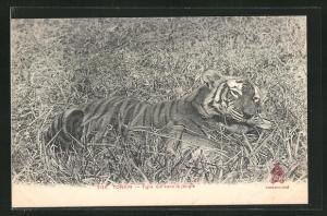 AK Tonkin, Tigre tué dans la jungle
