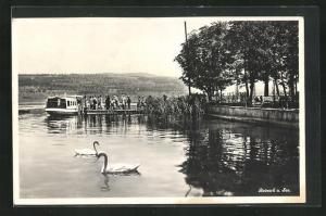 AK Beinwil a. See, Uferblick mit Dampfer an der Anlegestelle