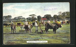 AK Burma, Ploughing Paddy Fields