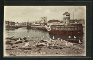 AK Douglas, Old Pier & Harbour