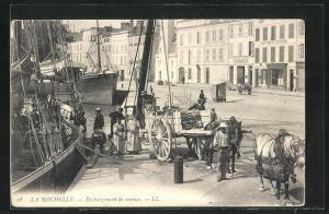 AK La Rochelle, Débargement de morues